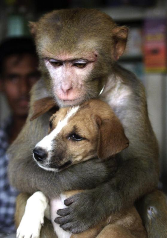 115628-monkey-and-puppy