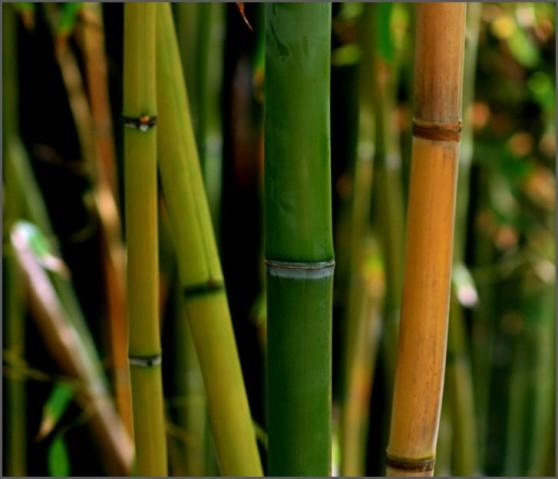 Bamb00