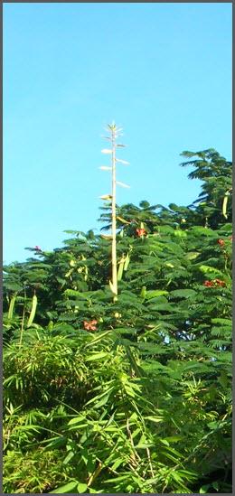 Bamboo_Oct_2012