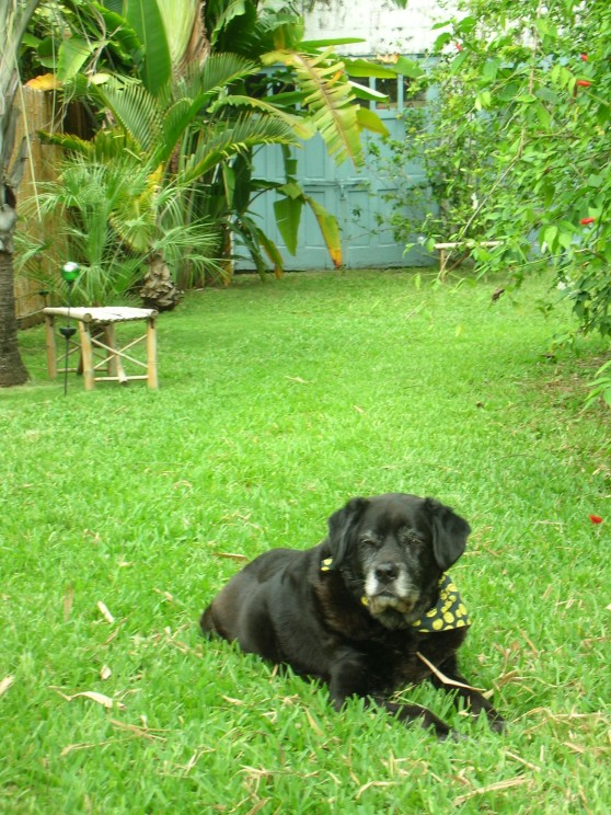"My ""son"" - 12 year old Bacchus, relaxing on the grass (Photo Credit: Heather Joan Marinos © 2013 – All Rights Reserved)"