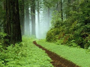 forest-trail