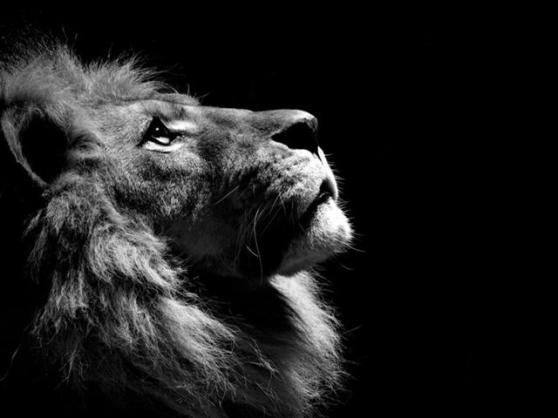 640px-Powerful_lion_wallpaper_by_dekalegitarist-d34cqj5