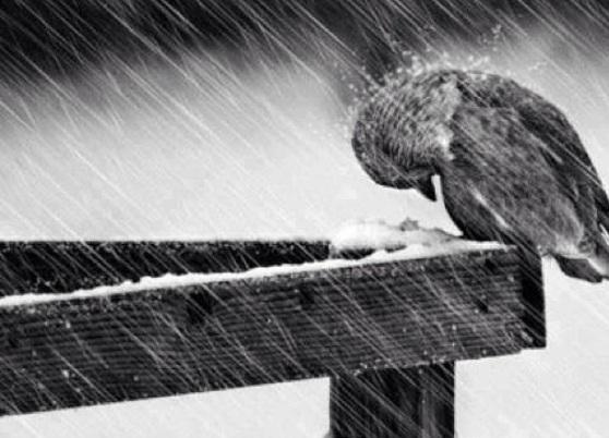 bird weather