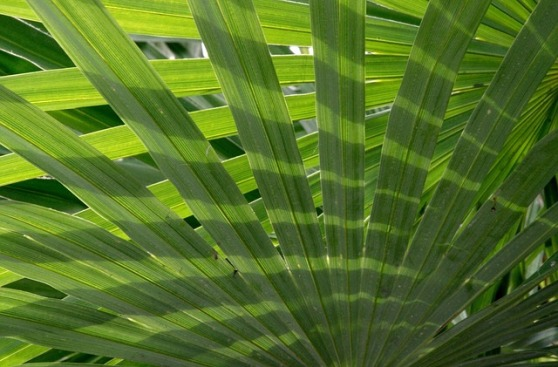 palm-fronds-76373_640
